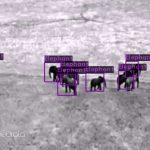 Neurala-and-Lindbergh-Fight-Poaching
